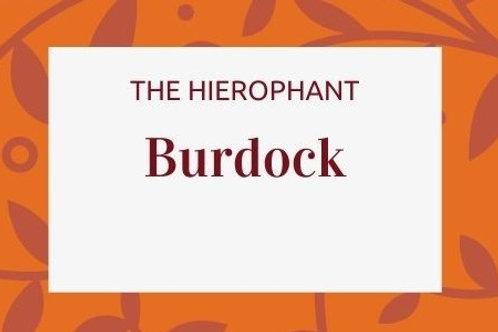 Burdock - Arctium lappa