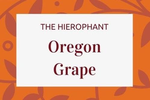 Oregon Grape  - Berberis Aquifolium