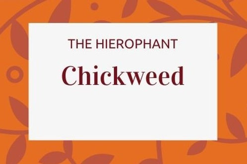 Chickweed - Stellaria media