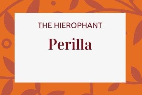 Perilla - Perilla frutescens