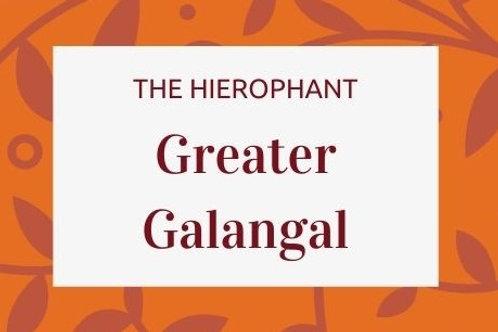 Greater Galangal - Alpinia galanga