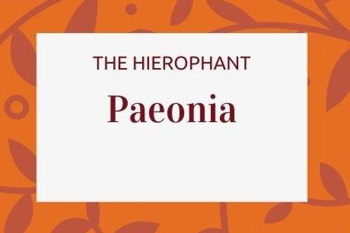 Paeonia - Paeonia suffruticosa: