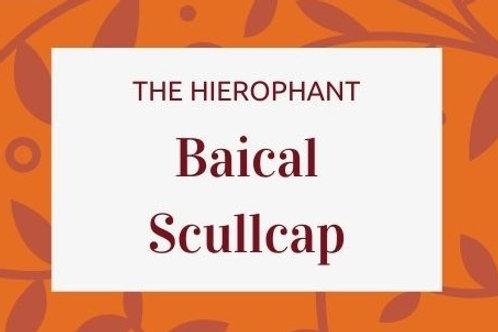Baical Scullcap - Scutellaria baicalensis