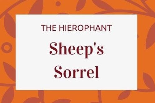 Sheep's Sorrel - Rumex acetosella