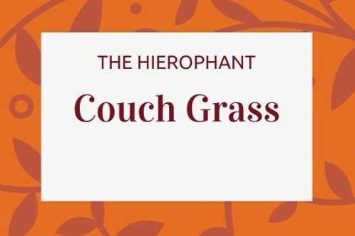 Couch Grass - Elymus repens