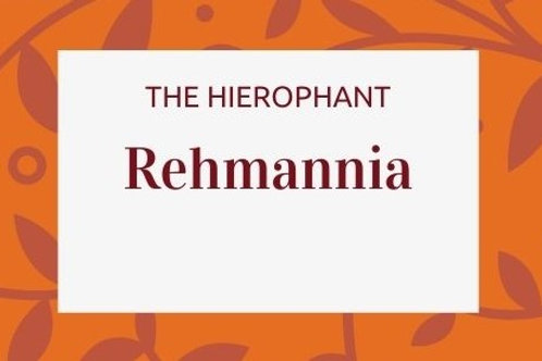Rehmannia - Rehmannia glutinosa.