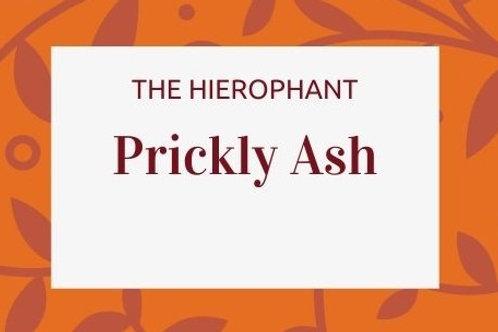 Prickly Ash - Zanthoxylum americanum