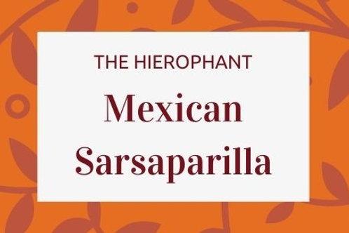 Mexican Sarsaparilla - Smilax aristolochiifolia