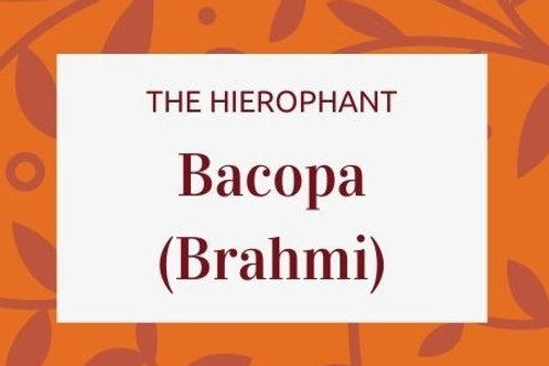 Bacopa - Bacopa monnieri (Brahimi)