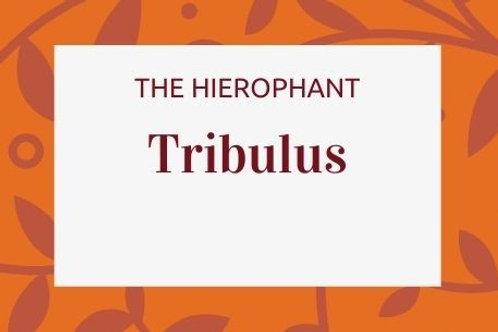 Tribulus - Tribulus terrestris