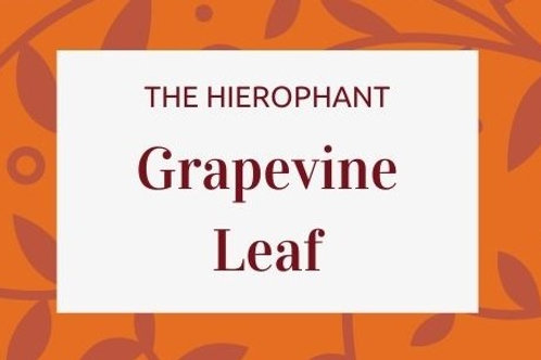 Grapevine Leaf - Vitis vinifera