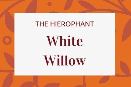 White Willow - Salix alba