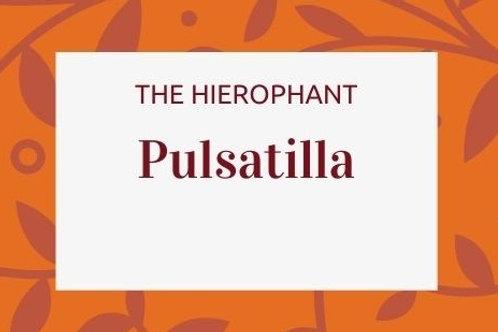 Pulsatilla - Anemone Pulsatilla
