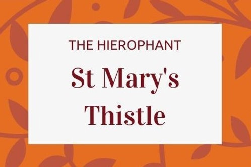St Mary's Thistle -Silybum marianum