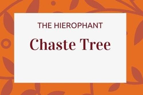 Chaste Tree - Vitex agnus-castus