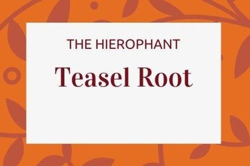 Teasel Root - Dipsacus fullonum