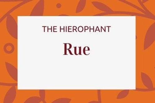Rue - Ruta graveolens