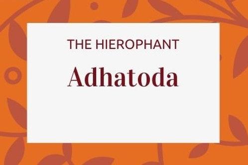 Adhatoda - Justicia adhatoda