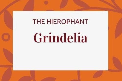 Grindelia - Grindelia camporum