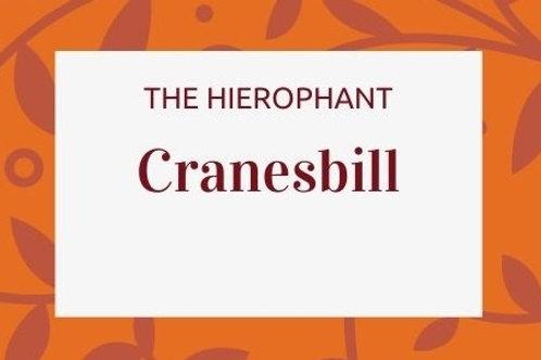 Cranesbill -Geranium maculatum