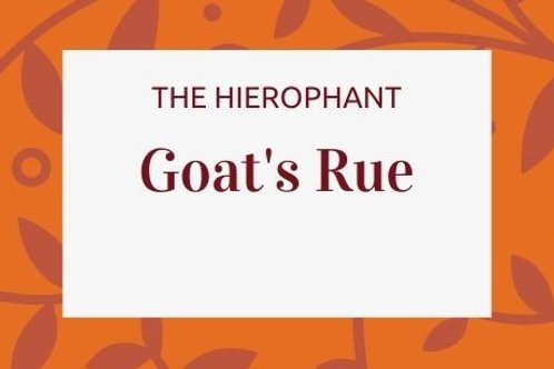 Goat's Rue - Galega officinalis