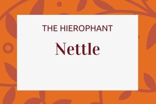 Nettle - Urtica Urens