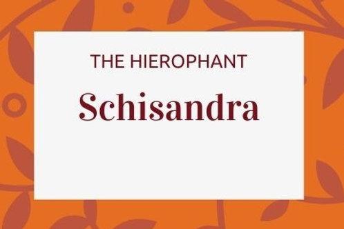 Schisandra - Schisandra chinensis