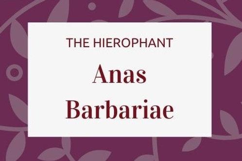 Anas Barbariae