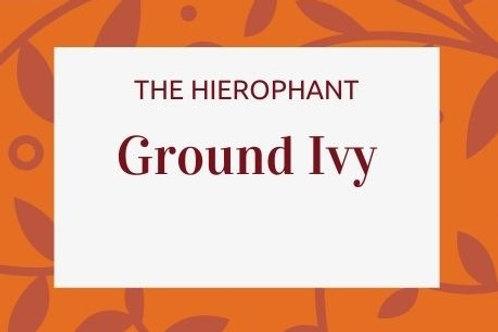 Ground Ivy - Glechoma hederacea