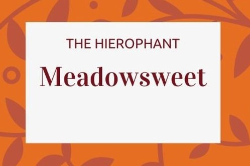 Meadowsweet - Filipendula ulmari
