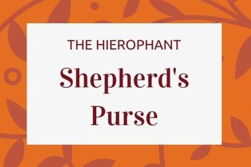Shepherd's Purse - Capsella bursa-pastoris