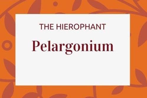 Pelargonium - Pelargonium sidoides