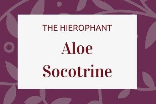 Aloe Socotrine
