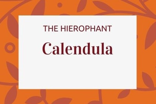 Calendula - Calendula officinalis