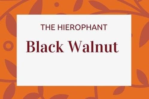 Black Walnut - Juglans nigra