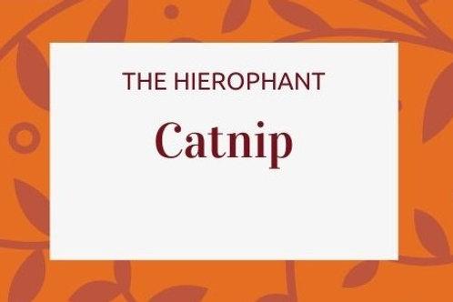 Catnip - Nepeta cataria