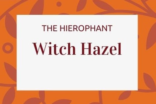 Witch Hazel - Hamamelis virginiana