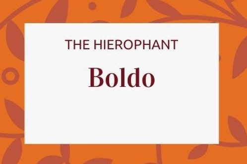 Boldo - Peumus boldus