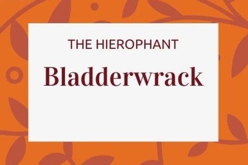 Bladderwrack - Fucus vesiculosus