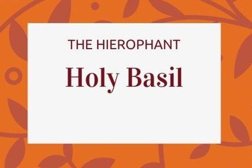 Holy Basil - Ocimum tenuiflorum