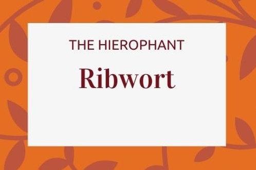 Ribwort - Plantago lanceolata