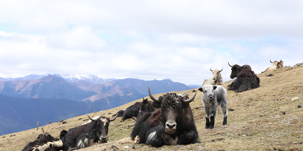 [SOLD OUT] Bhutan - 13D12N Trail of a Thousand Yaks