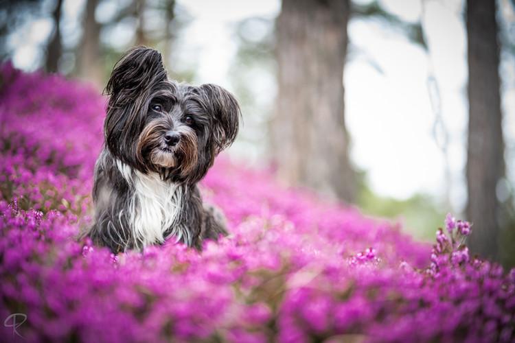 Haustierfotografie