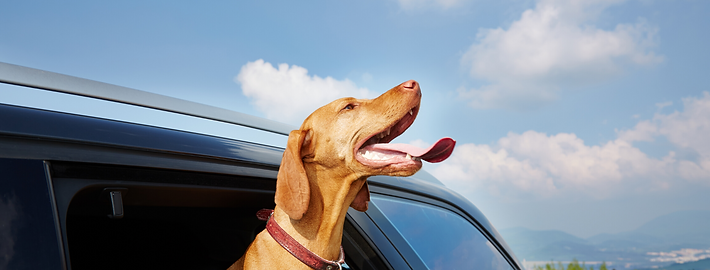 car doggy (1).png
