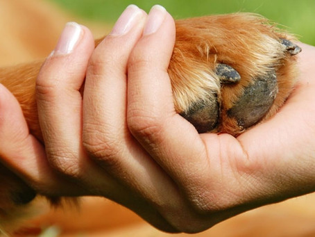 Keeping Your Pup's Paws Healthy
