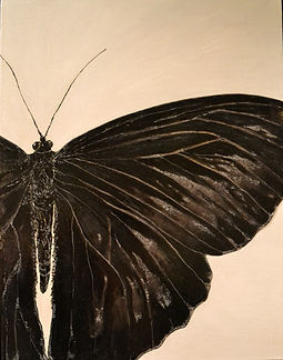 Black butterfly Edited Final .jpg