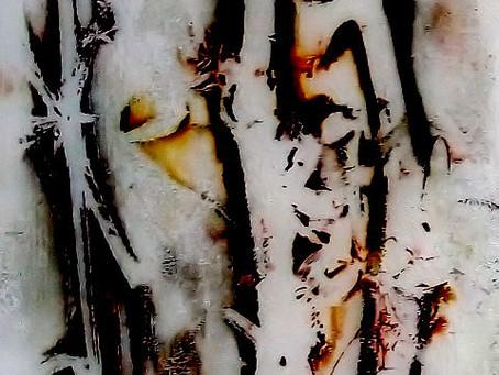 23.01.: Vernissage Lichtbilder von Anneliese Klotz