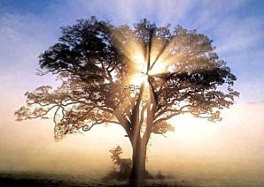 Bel-arbre-21_edited.jpg