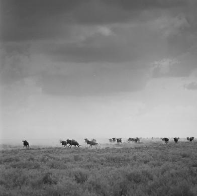 Serengeti - Tanzania. Hasselblad 500 120mm Film. 2018.