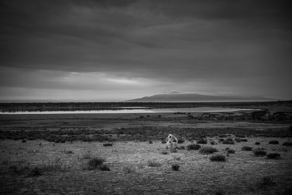 Serengeti - Tanzania. Leica M. 2018.